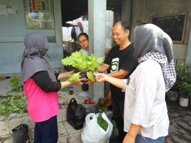 Panen Sayur di Kampung Jogonegaran